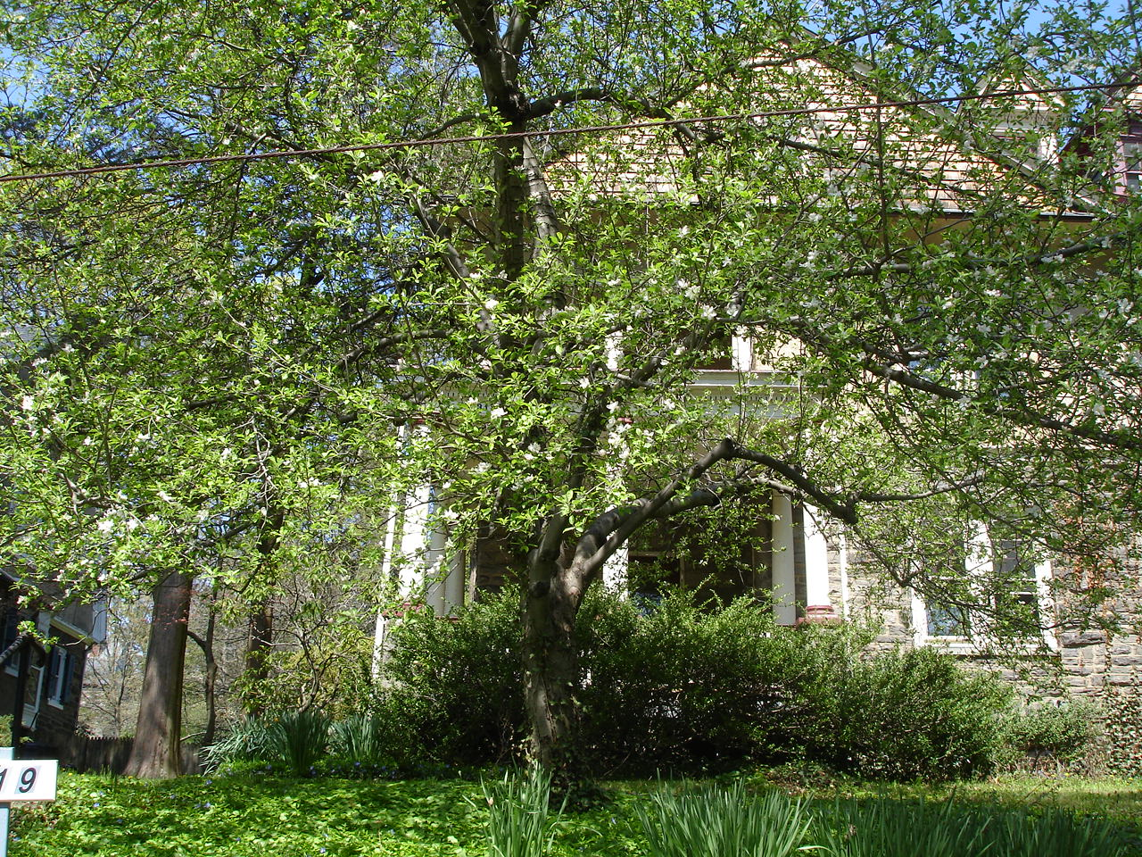 Дом в Филадельфии, где я жил в апреле 2011 года