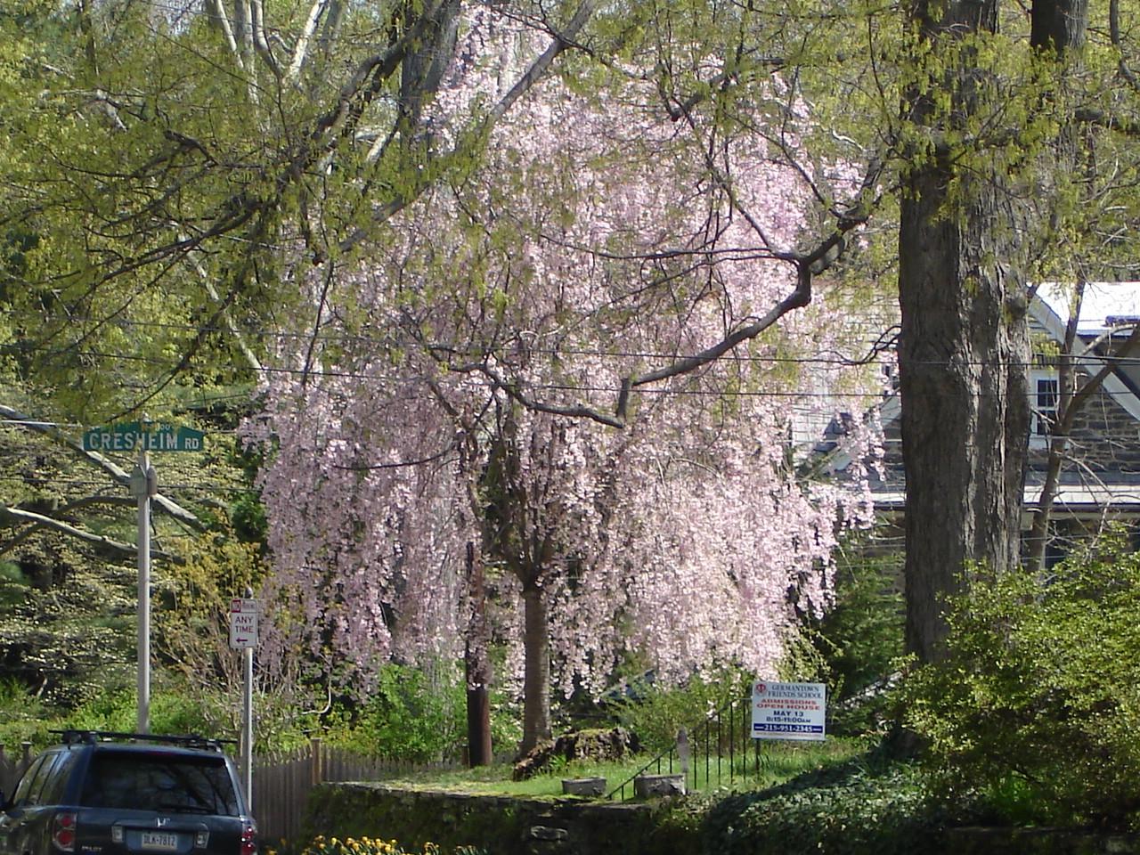 Весна в Филадельфии