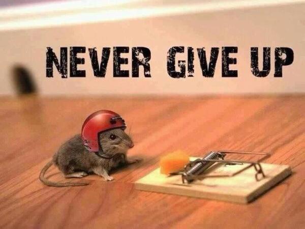 Никогда не сдавайтесь!